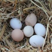 orto uova peppino 079